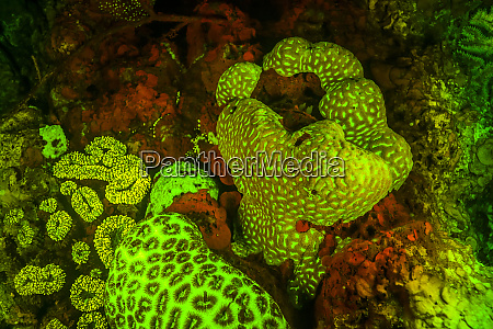 natural occurring red and green fluorescence