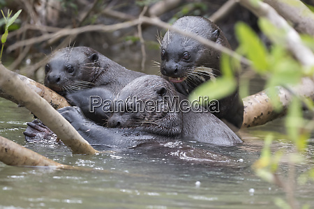 brazil the pantanal a group of