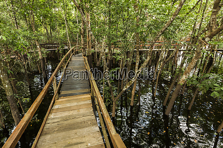 a wooden walkway at a jungle