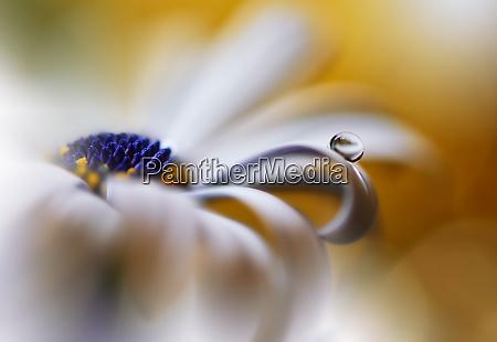 beautiful macro shot of magic flowersborder