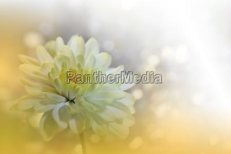 beautiful golden nature backgroundfloral fantasy designartistic
