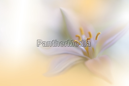 beautiful golden nature backgroundmacro shot of