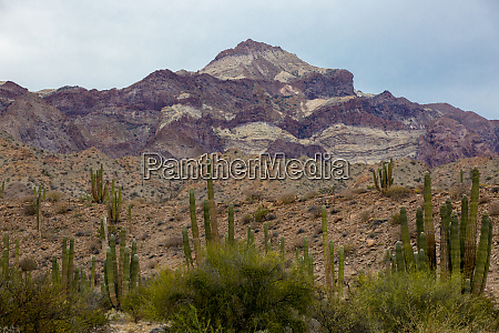 cactus landscape angel de la guarda