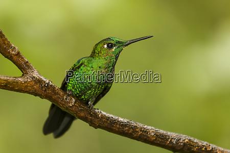 monteverde national park costa rica green