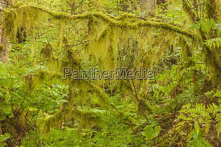 usa alaska tongass national forest moss