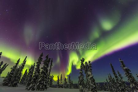 aurora borealis northern lights near fairbanks