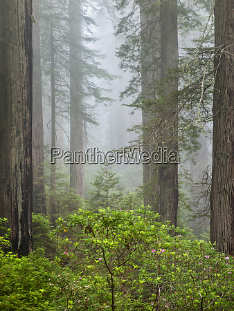 usa california redwood national and state