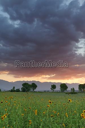 usa california sierra nevada mountains sunflowers