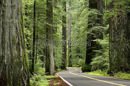 usa california humboldt redwoods state park
