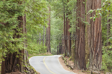 usa california view of road through