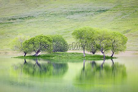 usa california trees on island reflect