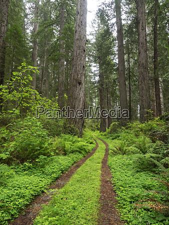 california del norte coast redwoods state
