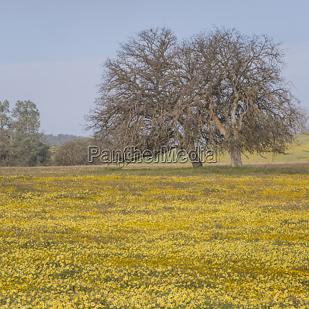 usa california shell creek road field
