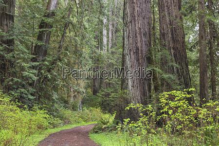 usa california redwood national park trail