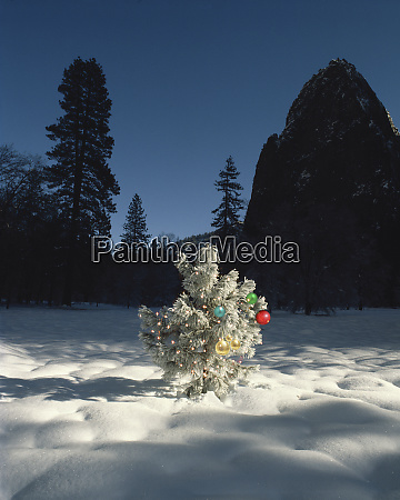 usa california yosemite national park tree