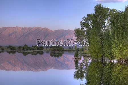 usa california cottonwood trees in flooded