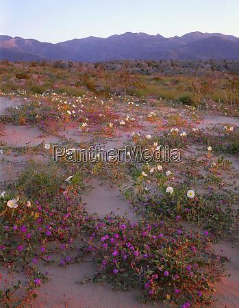 usa california anza borrego desert state