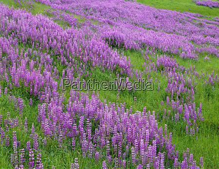 usa california redwood national park meadow