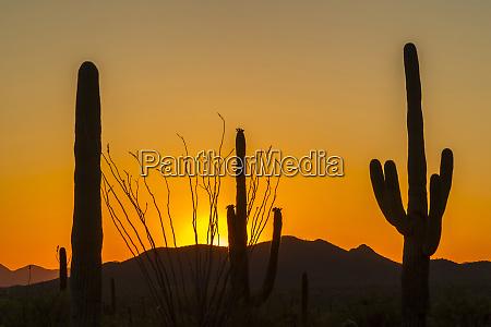 usa, , arizona, , saguaro, national, park., sunset - 27338107