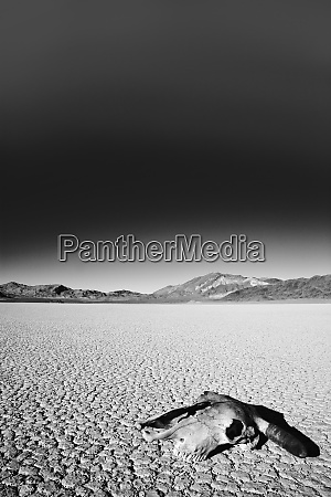 usa, , california, , death, valley, national, park. - 27338359
