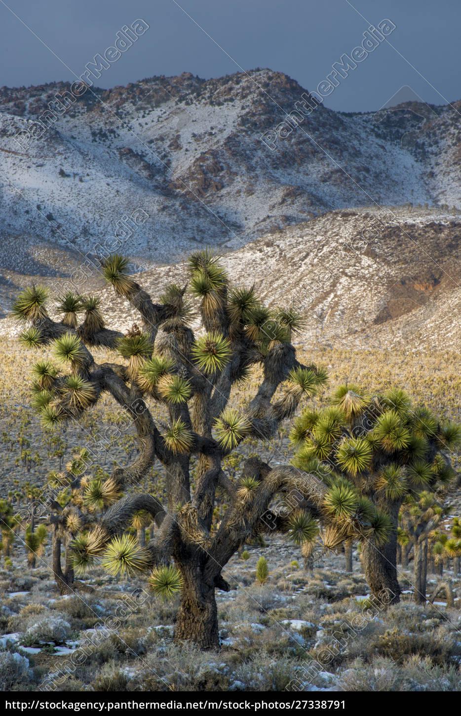 usa, , california., death, valley, national, park. - 27338791