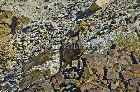 usa, , california, , death, valley, national, park - 27338186