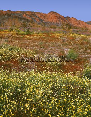usa, , california, , joshua, tree, national, park, - 27338741