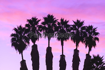 hollywood sunrise california usa palm trees