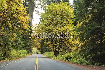 prairie creek area redwoods state park