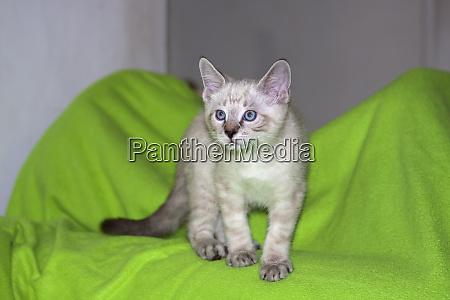 kitten on neon green