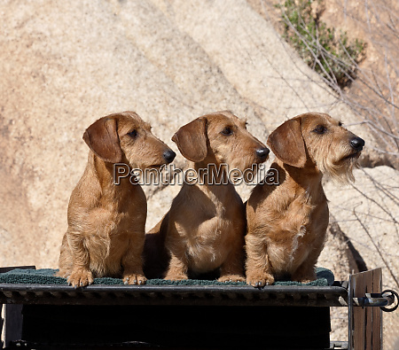 three doxens on a bbq grill