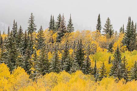 usa colorado grand mesa mountain forest