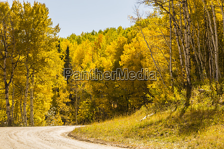 usa colorado gunnison national forest road