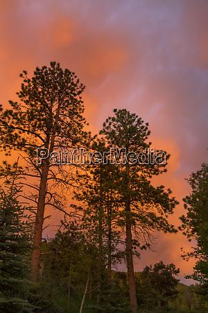 usa colorado woodland park fiery sunset