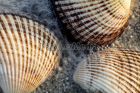 seashells on sanibel island in florida