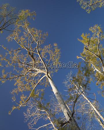 cypress trees corkscrew swamp sanctuary florida