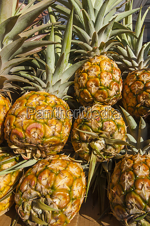 fresh pineapple at the saturday farmers