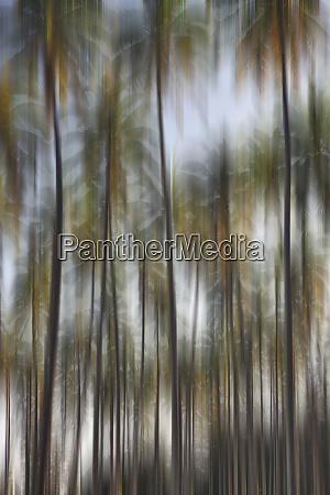 blurred motion of palm trees