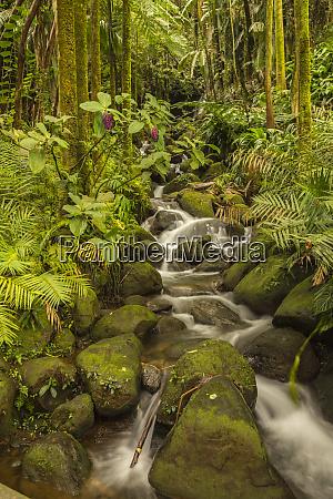 usa hawaii hawaii tropical botanical garden