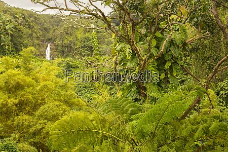 usa hawaii akaka falls state park