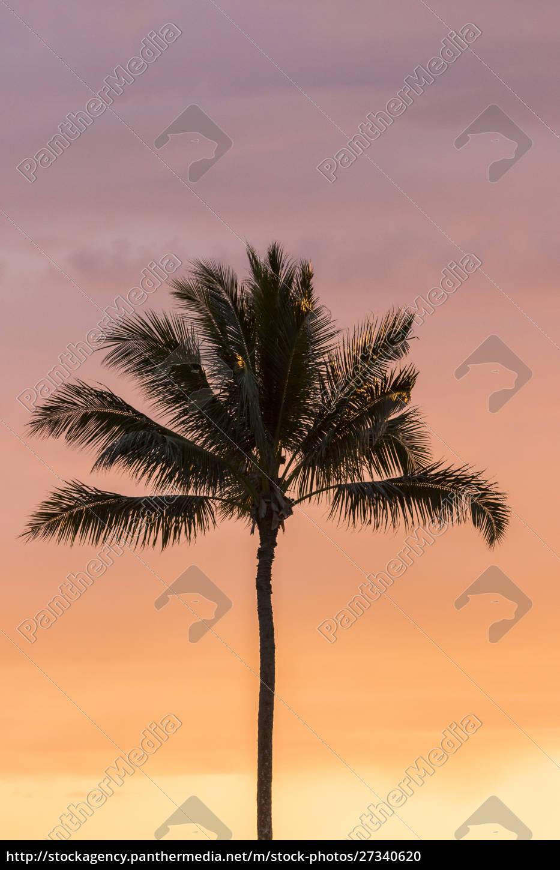 usa, , hawaii, , kauai, , lawai., palm, tree - 27340620