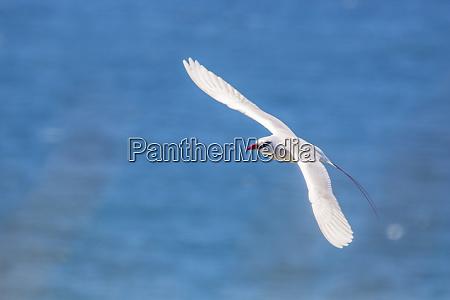 usa, , kauai, , kilauea, point, national, wildlife - 27340624
