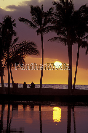 hawaii palm trees with sun setting
