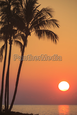 maui hawaii usa palm trees in