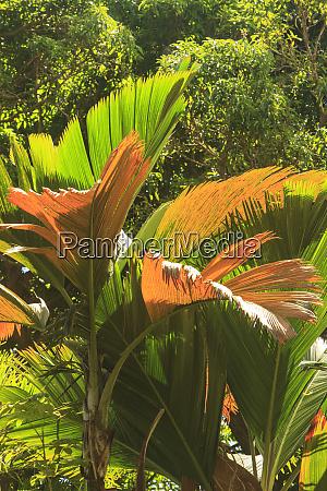 hawaiian tropical botanical gardens near hilo