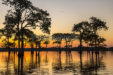 usa louisiana lake martin sunrise on