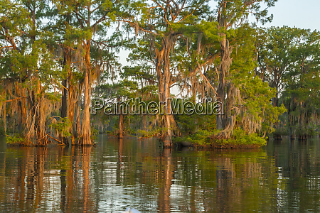 usa louisiana atchafalaya national wildlife refuge