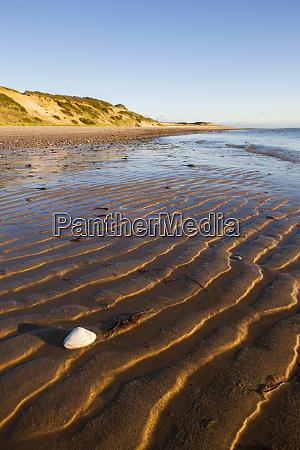 clam shell on the beach along