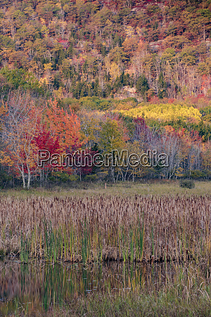 usa maine autumn foliage reflected in