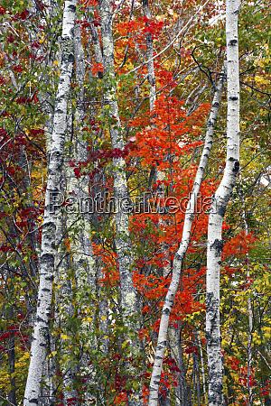 autumn trees acadia national park maine
